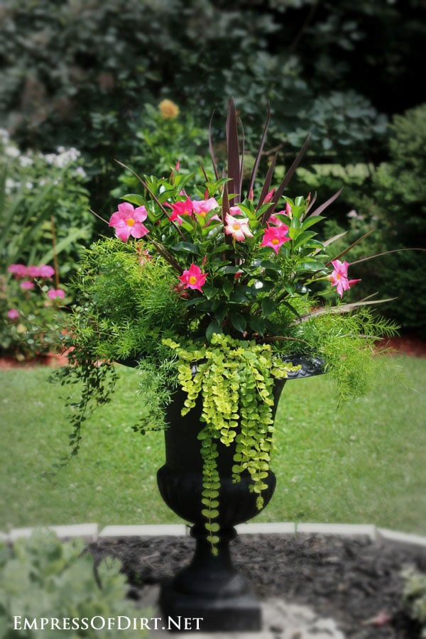 Pink flowers and lime greens in a black urn | 21 Gorgeous Flower Planter Ideas to inspire your garden