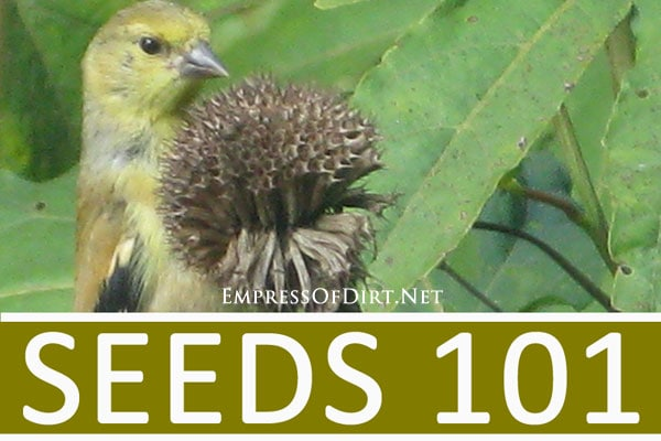 Seeds 101: Simple guide to understand types of seeds for your garden