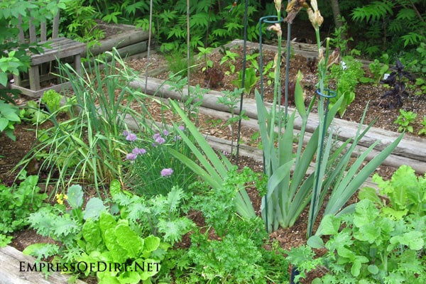 How to harden off seedlings for planting outdoors for a successful veggie and flower garden