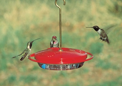 How to choose the best hummingbird feeder