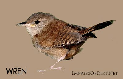 DIY Birdhouses: make a wren nesting box and find out what birds need for a safe and happy home for raising their young. A watercolour image of a wren is used to decorate the box.