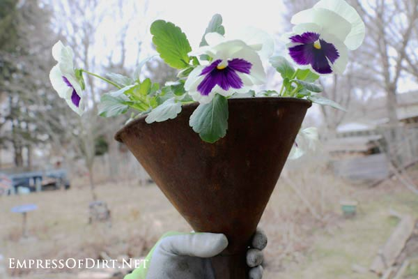 How to make junk garden planters - turn junk shop finds like this old metal funnel into beautiful flower containers
