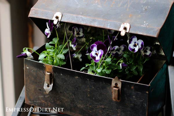 How to make junk garden planters - turn junk shop finds like this old lunchbox into beautiful flower containers