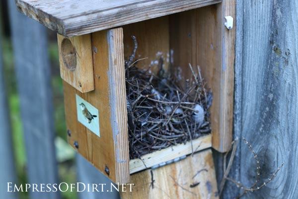 Wren nesting box with nest inside
