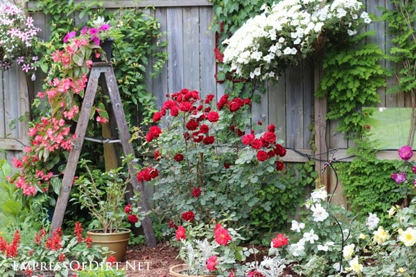 Kick your garden up a notch with these 12 Colourful Garden Ideas at empressofdirt.net.