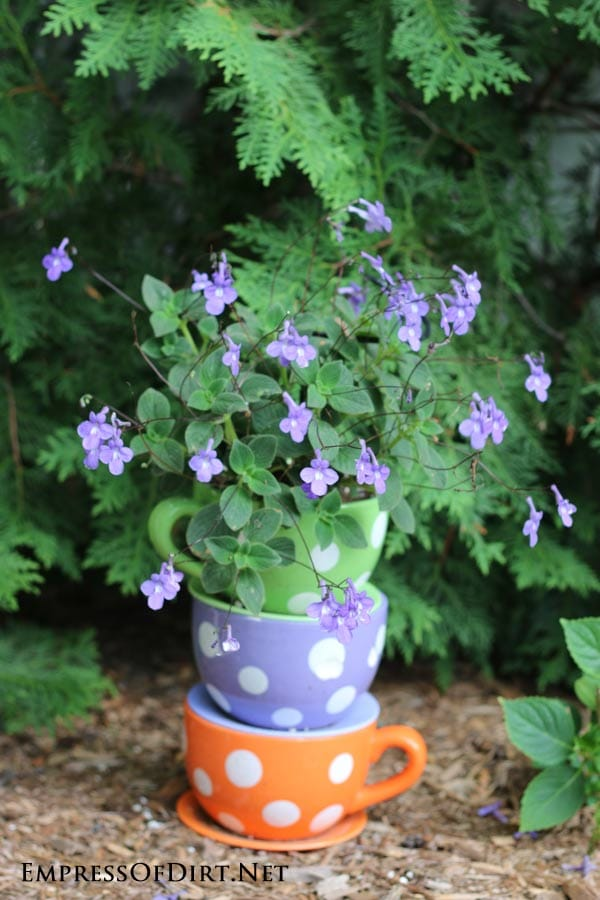 Kick your garden up a notch with these 12 Colourful Garden Ideas at empressofdirt.net. Here giant polka-dotted teacup plants add a pop of colour.