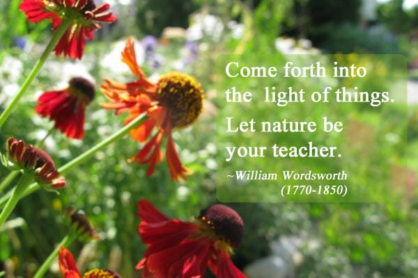 Come forth into the light of things. Let nature be your teacher. ~William Wordsworth