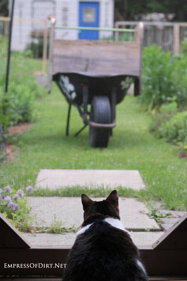 Cat looking at a chipmunk standing on a newly made DIY wheelbarrow garden trug.
