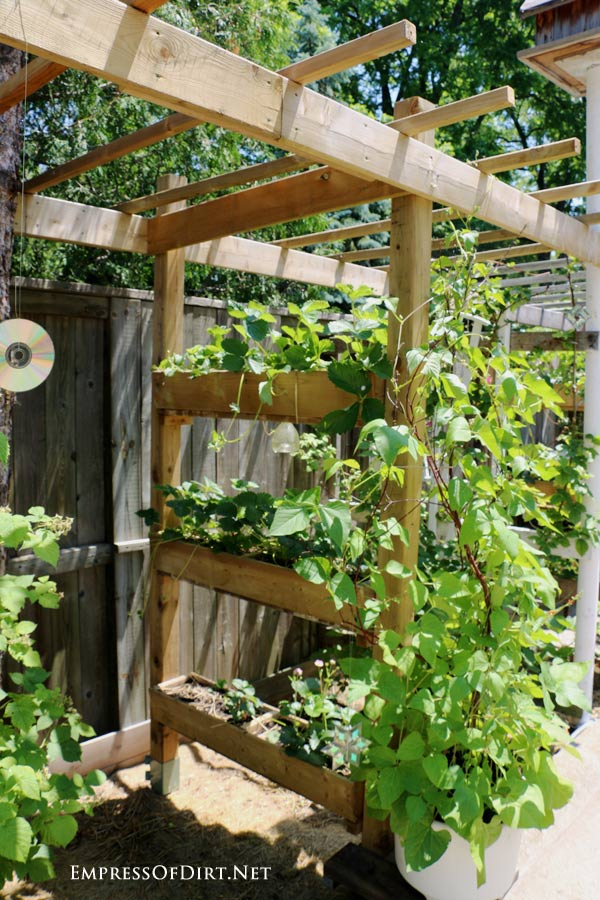 This DIY strawberry arbor is a smart way to add vertical growing space to your garden. Grow any crops that like containers such as strawberries, salads, herbs, or tomatoes.