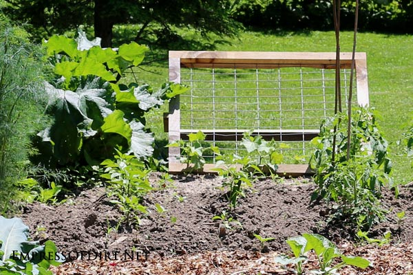 A sturdy wire mesh trellis provides a vertical growing area for climbing fruits and veggies including zucchini, cucumber, squash, and melons. These provide good air flow and keep the fruit from getting damanged on the ground.