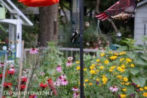 Birds-in-my-garden