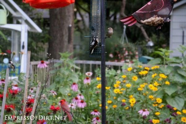 http://empressofdirt.net/wp-content/uploads/2015/07/Garden-Sites-Digging-This-Week-C31.jpg