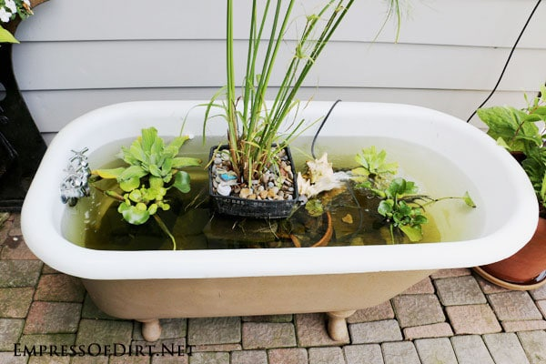 Diy bathtub garden pond empress of dirt for Garden pond do you need a pump