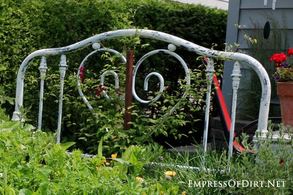 Old metal headboard in garden bed.
