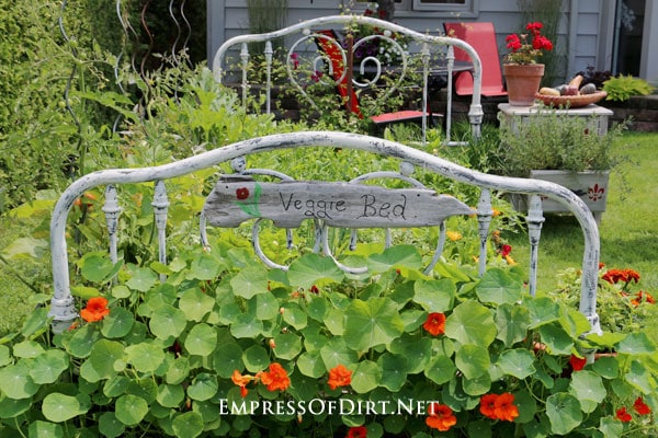 Old metal headboard and footboard in veggie garden.