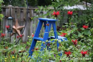 Why-not-grow-a-garden-ladder