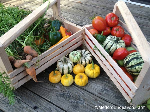 Harvest basket on Etsy by MeffordEndeavorsFarm