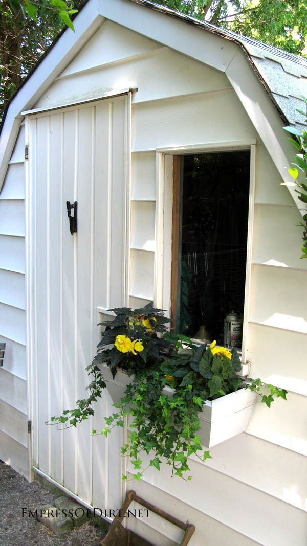 White garden shed with window box showing yellow flowers and trailing ivy vine.