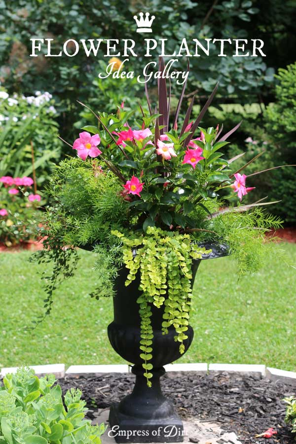 21 gorgeous flower planter ideas empress of dirt for Outdoor planter ideas