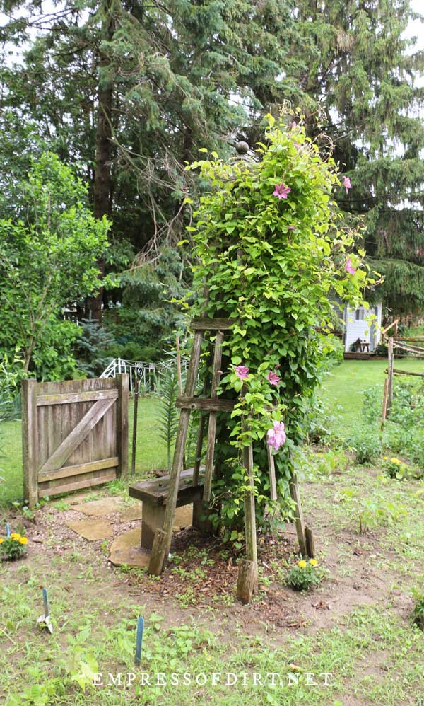 Wood support with large clematis plant and pink flowers.