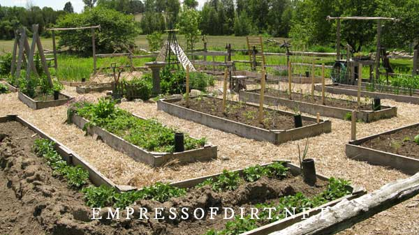 Raised garden beds with straw mulch walkways.