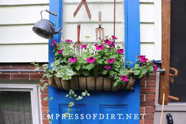 Old blue farmhouse door decorated with garden junk and a hayrack planter filled with purple petunias.