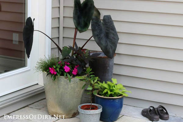Collection of potted plants near the back door of house.