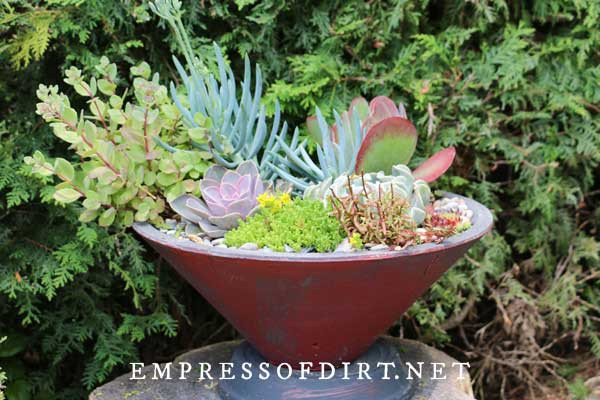Delightful Dish of Succulents