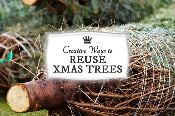 25+ Creative Ways to Reuse Xmas Trees