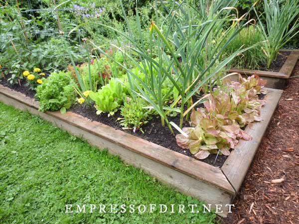 Low wood raised beds with vegetables.