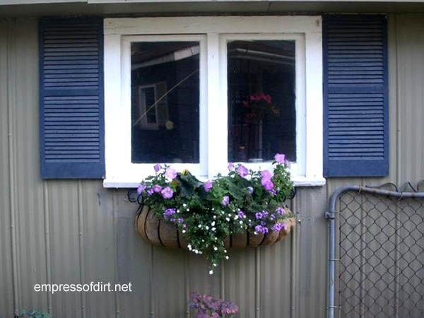 Window box on shed featuring purple flowers.