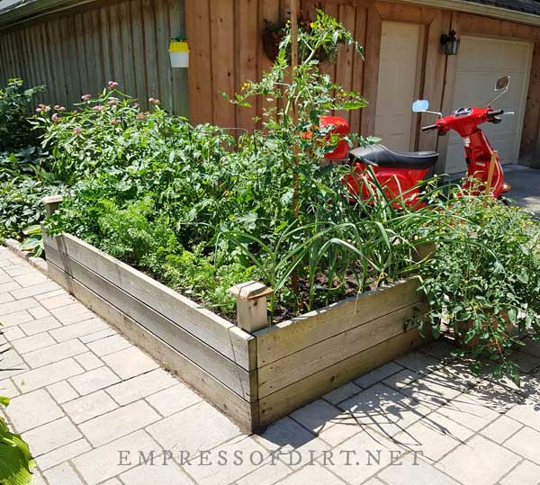 Raised vegetable beds by walkway to front of house.