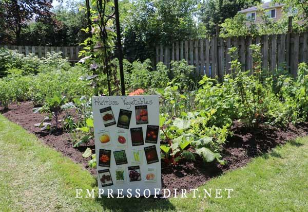Heirloom vegetables in garden.