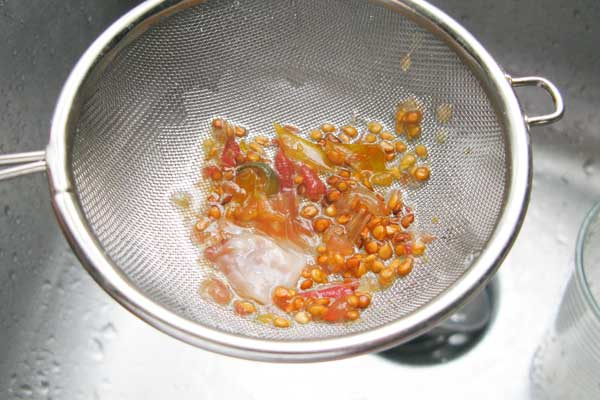 Rinsing tomato seed pulp.