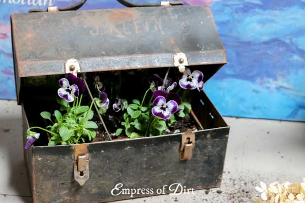 Lunch Box Pansy Planter