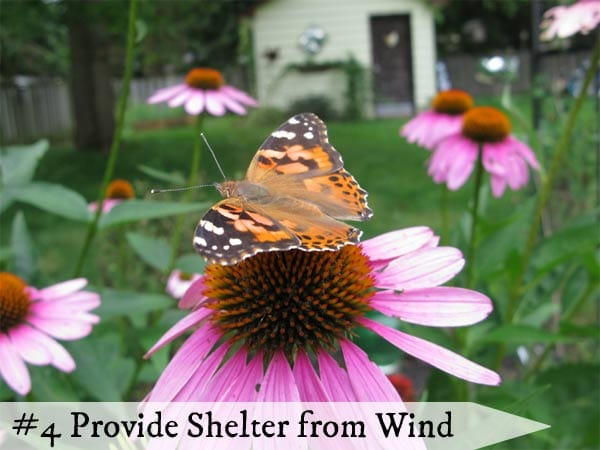 Strong winds make it very hard for butterflies to reach flowers.