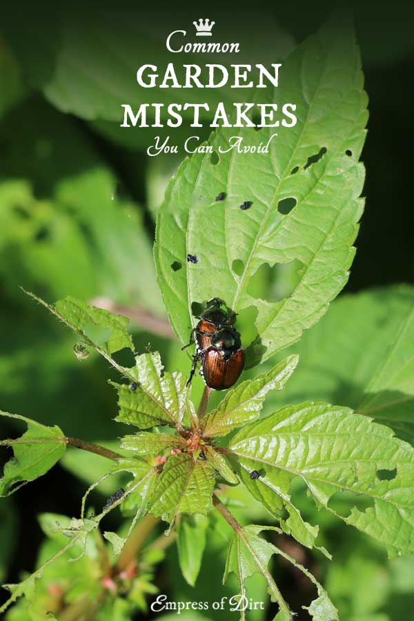 6 Common garden mistakes you can avoid