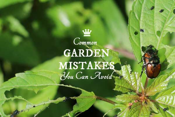 Oh No You Didn't! 6 Common Gardening Mistakes
