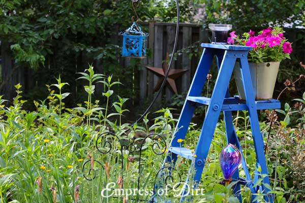 Blue garden ladder in garden with pink petunias.