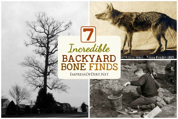 How cool would it be to find a dinosaur, prehistoric wolf, or mammoth bones while digging in the garden? This collection of stories shows some incredible discoveries of bones in backyards.