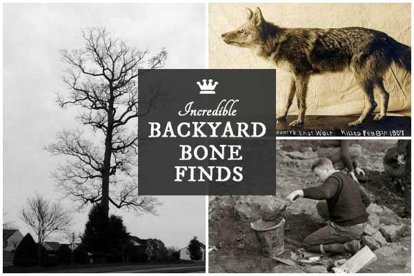 7 Incredible Backyard Bone Finds