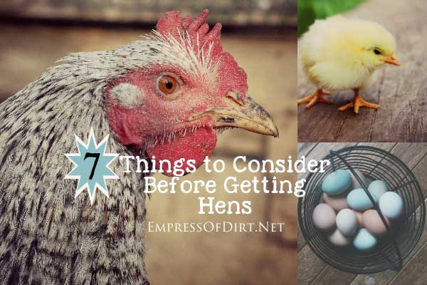 7 Things to Consider Before Getting Hens