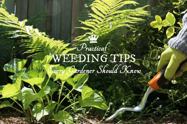 7 Weeding Tips Every Gardener Should Know