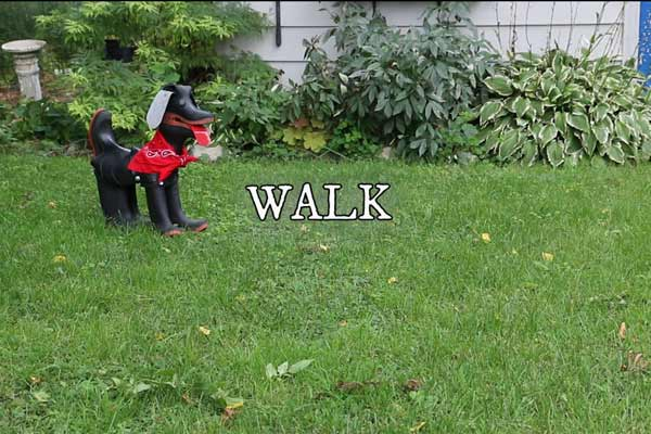 Rubber boot dog walking on lawn.