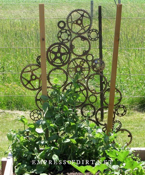 Bike gears used to as garden trellis.