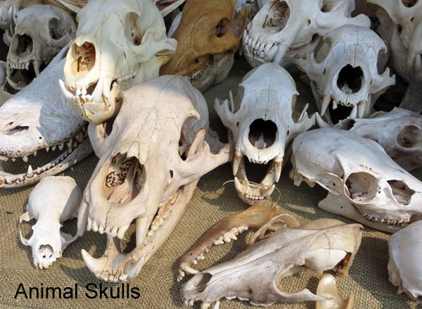 What to Do if you Find Bones in Your Garden | Empress of Dirt