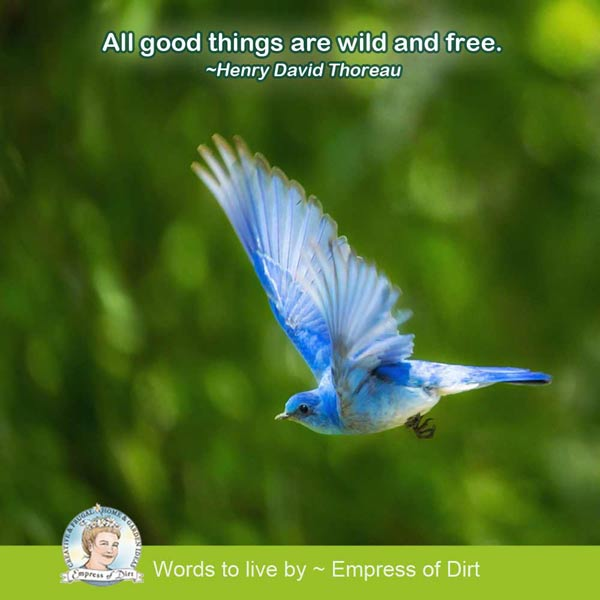 All good things are wild and free. ~Henry David Thoreau