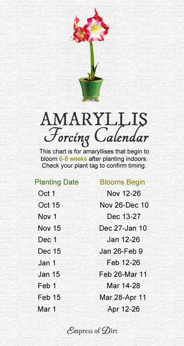 Amaryllis forcing calendar showing when to plant for blooms by a specific date.