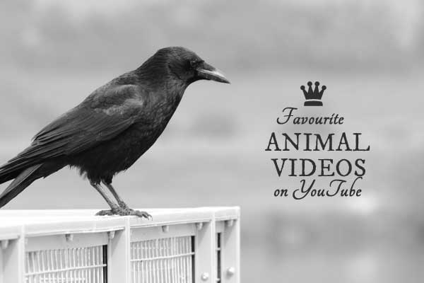 Cute, funny, and amazing animal videos on YouTube curated by Empress of Dirt