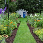 Backyard garden with grass path and flowering perennials in front of shed.
